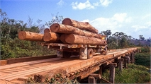 More needs to be done to cut supply chain deforestation
